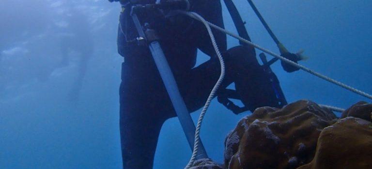 【論文発表のお知らせ】人為起源によるサンゴ礁の撹乱の変遷をサンゴ骨格から検出 ~奄美大島住用湾における産業発展・土地利用変遷に対するサンゴの応答~