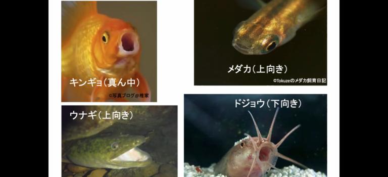 オンラインセミナー7月3日(金)「魚の形からわかること」